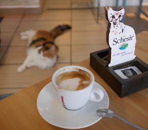 Credit: Petar Milošević, Cat Cafe (Cat Caffe), CC BY-SA 4.0