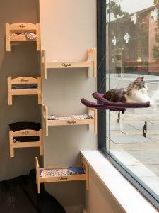 Credit: Photograph by Mike Peel (www.mikepeel.net)., Manchester Cat Cafe 2016 002, CC BY-SA 4.0