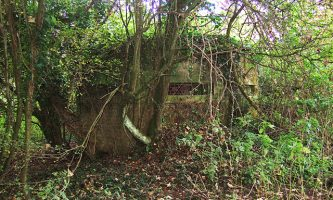 Local Campaign Wages Battle Against Tree Felling by Southampton Airport